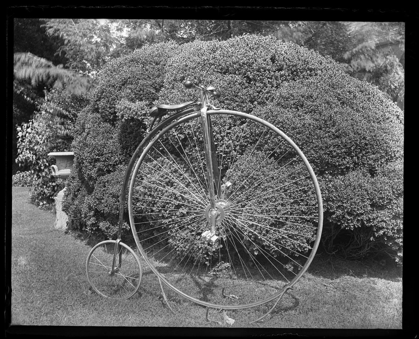 Marriott Canby Morris. My Bicycle, Side View in Front of Box Bush. (Miss Annes), 1887. Glass negative. Marriott C. Morris Collection