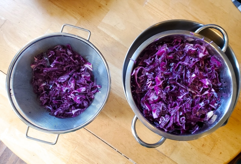 Draining the shredded and salted cabbage after letting sit overnight