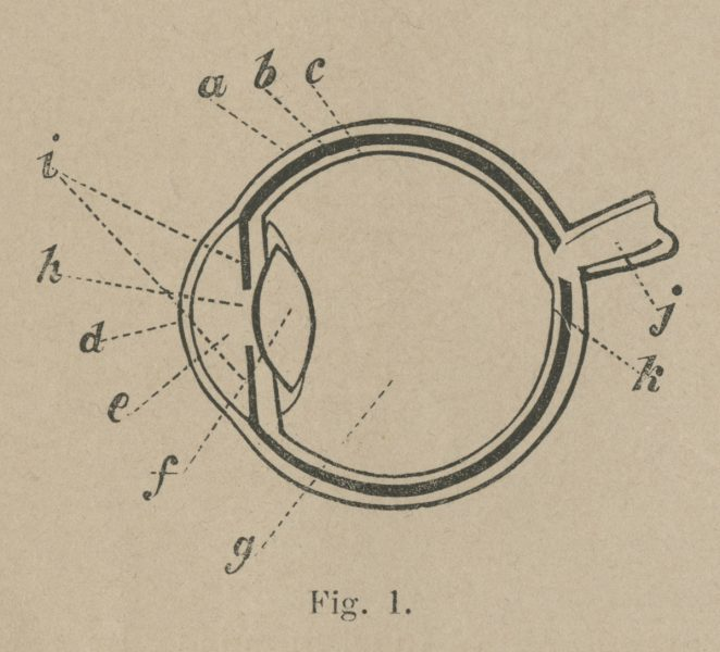 Diagram of an eye from Spectropia.