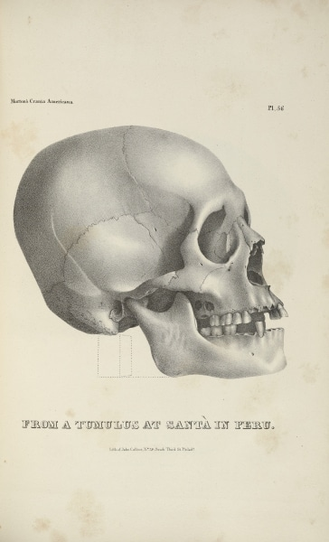 Pl. 56 in Samuel George Morton, Crania Americana or, A Comparative View of the Skulls of Various Aboriginal Nations of North and South America (Philadelphia: J. Dobson; 1839). Lithograph