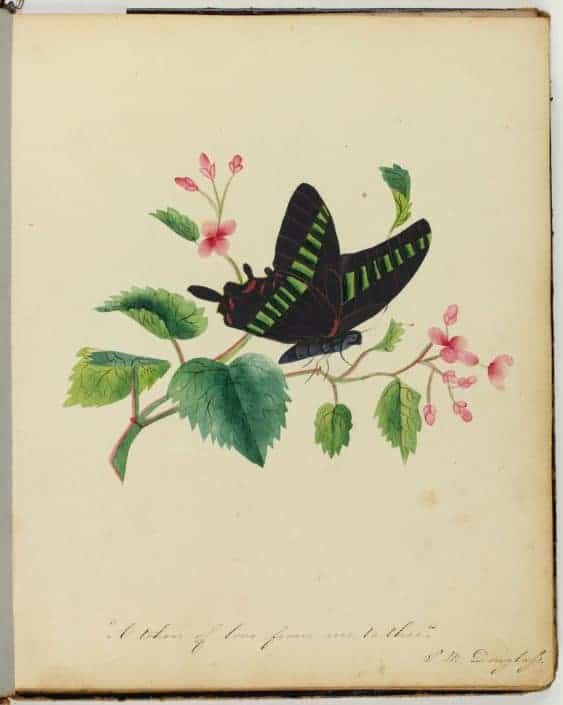 Sarah Mapps Douglass, A Token of Love from Me to Thee from the Amy Matilda Cassey Friendship Album (circa 1836). Watercolor and gouache.