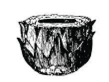 Woodcut of artichoke from